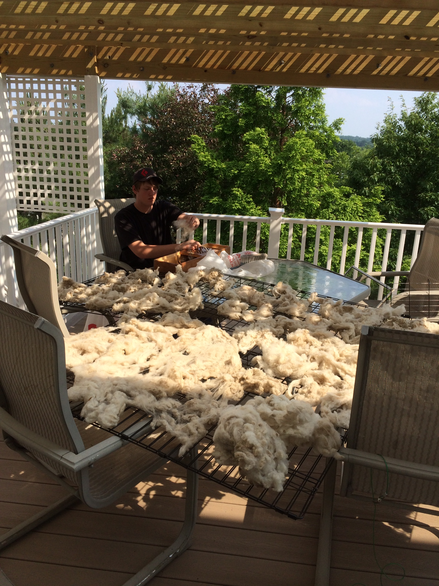 Sheep wool drying on racks